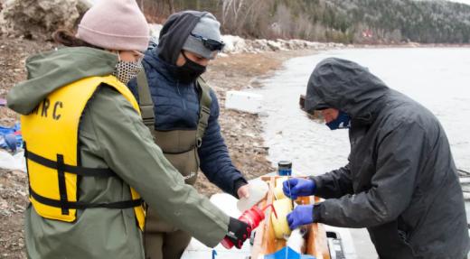 Des chercheurs micmacs suivent des saumons au-delà des eaux canadiennes