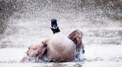 Des défis dans la gestion de la faune