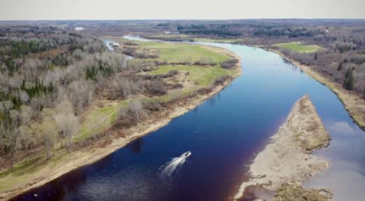 Un insecticide pour éliminer l'achigan à petite bouche de la rivière Miramichi