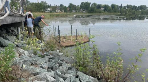 Des îles flottantes sur le lac Osisko pour lutter contre les plantes envahissantes
