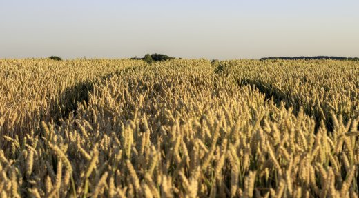 Milieu agricole : plus de 225 000 $ pour la conservation et la mise en valeur des habitats fauniques
