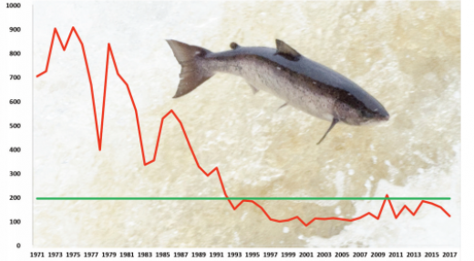 La récolte totale de saumons de l'Atlantique Nord atteint son plus bas niveau entraînant un regain de la population