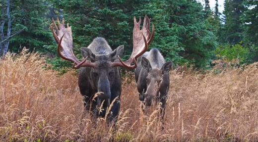 Droits de chasse  – Les zones 10 et 11 admissibles au remboursement