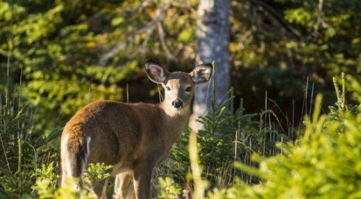 Sépaq Anticosti: Ouverture des réservations pour la chasse expérimentale 2019