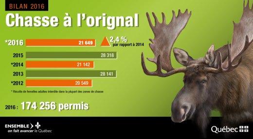 Une saison de chasse à l'orignal 2016 réussie