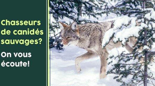 Sondage sur les chasseurs de canidés sauvages (renard, coyote, loup)