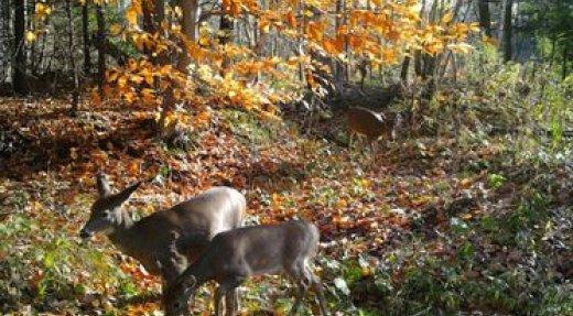 Comment choisir une caméra de chasse selon vos besoins?