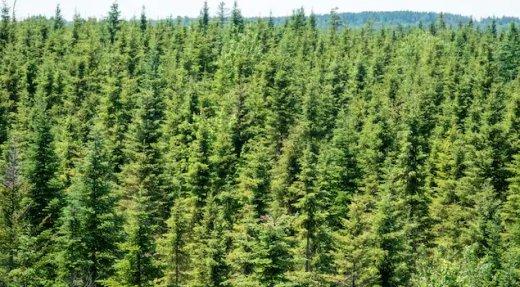 Les coupes forestières dorénavant permises sur de plus grandes superficies