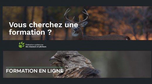 Les formations pour l'arbalète et ICAF en ligne disponibles