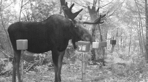 Sondage - Développement d'un modèle de qualité d'expérience de chasse à l'orignal