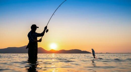 Pêcheurs d'aloses recherchés