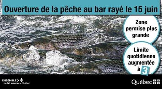 Le Ministère annonce des nouveautés importantes pour la pêche sportive au bar rayé en vue de son ouverture le 15 juin prochain